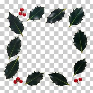 Holly Frames PNG