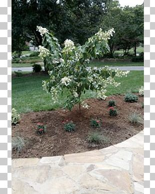 Landscape Design Backyard Tree Landscaping PNG