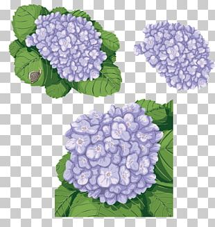 French Hydrangea Flower PNG