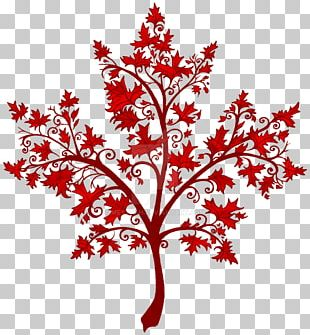 Maple Leaf Twig Canada Japanese Maple PNG