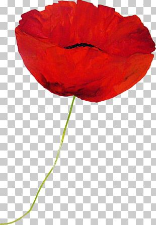Flower Drawing Cartoon Animation PNG