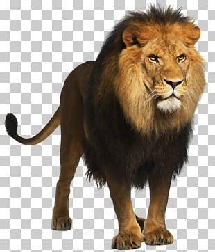 Lion Computer File PNG