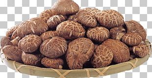 Edible Mushroom Shiitake Fungus Medicinal Fungi PNG