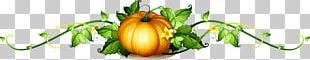 Pumpkin Vine PNG