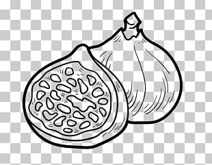 Drawing Coloring Book Common Fig Food PNG