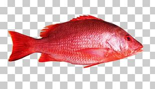 Northern Red Snapper Fish Maxima Seafood PNG