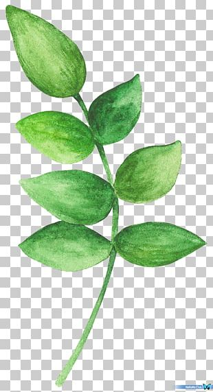 Watercolor Painting Leaf Branch PNG
