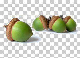 Acorn Oak Management Organization Consultant PNG
