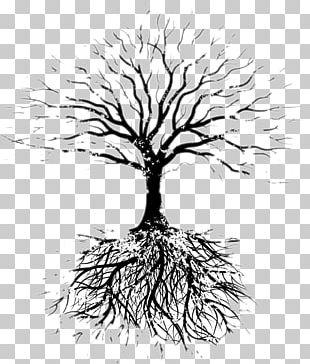 Tree Oak Root Branch PNG