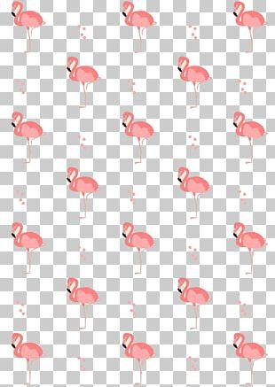 Flamingos Drawing Bird PNG