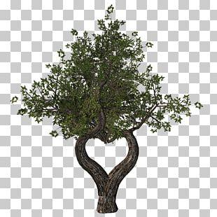 Tu B'Shevat Ansichtkaart Tree Holiday Yom Kippur PNG