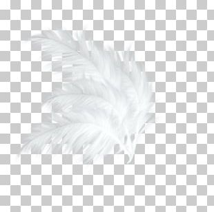 White Feather Black Pattern PNG