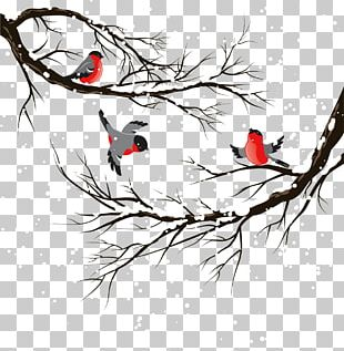 Bird Winter Illustration PNG