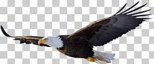 Eagle Flight Bird PNG