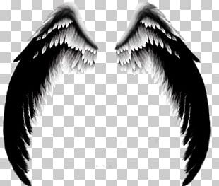 Wing Angel PNG