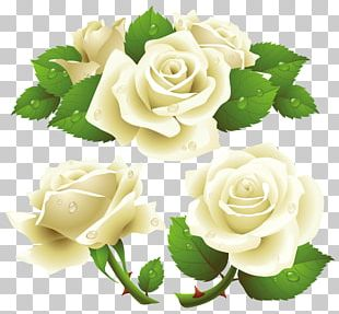 The White Rose White Rose Of York PNG