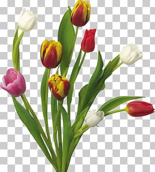 Tulip Flower Bouquet Desktop Flower Garden PNG