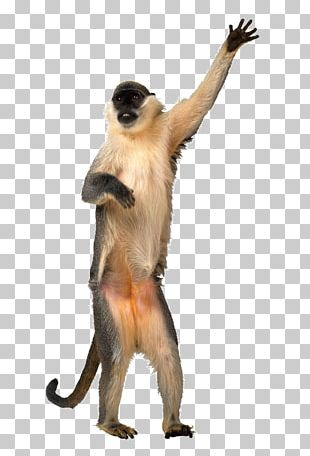 Animation Dance Monkey Giphy PNG