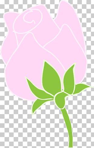 Rosaceae Floral Design Petal PNG
