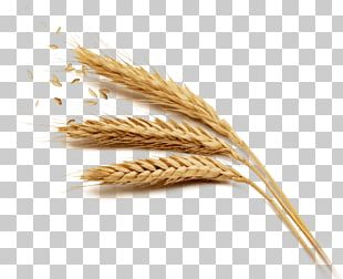 Cereal Whole Grain Rice Food PNG