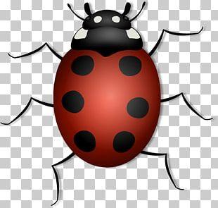 Beetle Ladybird PNG