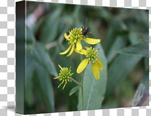 Honey Bee Flora Nectar Pollen PNG