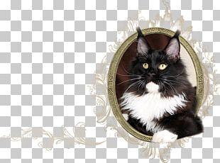 Norwegian Forest Cat Maine Coon Whiskers Kitten Domestic Short-haired Cat PNG