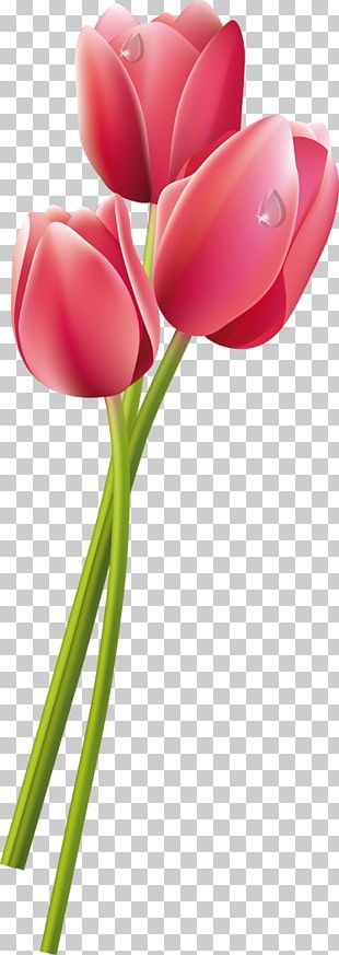 Tulip Flower Eşin Group Pink PNG