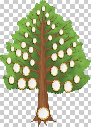 Family Tree Genealogy Generation PNG