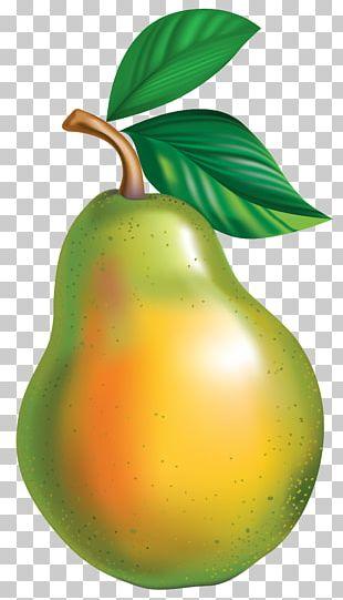 Pyrus × Bretschneideri Asian Pear PNG