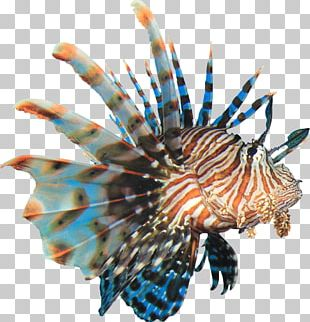 Coral Reef Fish Red Lionfish PNG
