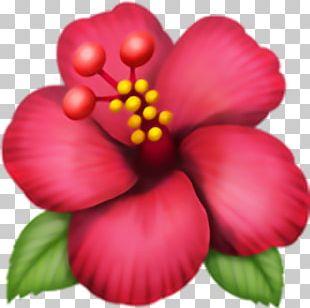 Emoji Domain Hibiscus .ws PNG