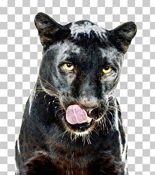 Leopard Jaguar Black Panther Cat Dog PNG