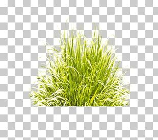 Green Grass Icon PNG