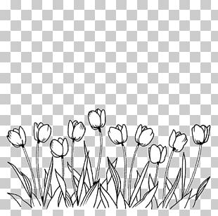 Flower Tulip Coloring Book Line Art Drawing PNG