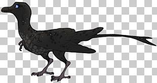 Galliformes Velociraptor Bird Fauna Beak PNG