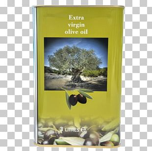 Olive Oil Saturated Fat Archiwum Allegro Calorie PNG