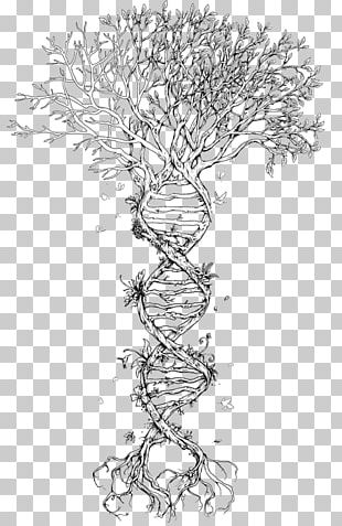 Family Tree DNA Tree Of Life Genetics PNG