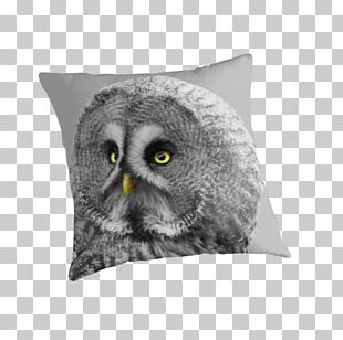 Owl Throw Pillows Cushion Beak Snout PNG