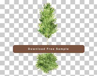 Pine Family Landscape Design Landscaping Computer Software Plan PNG
