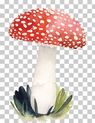 Illustrator Mushroom Illustration PNG