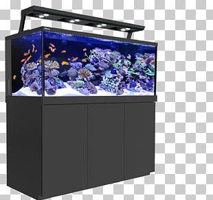 Red Sea Reef Aquarium Coral Reef PNG
