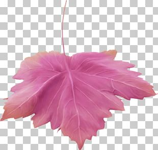 Maple Leaf Petal Flower Painting PNG