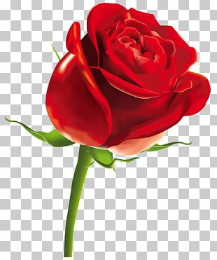 Rose Scalable Graphics Computer File PNG