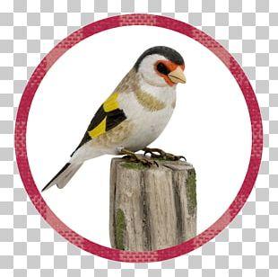 European Goldfinch Vogel Des Jahres The Goldfinch Siskins And New World Goldfinches Naturschutzbund Deutschland PNG