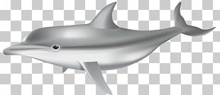 Common Bottlenose Dolphin Tucuxi PNG