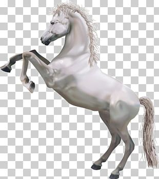 Horse Perseus Pegasus Illustration PNG