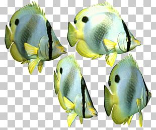 Angelfish Portable Network Graphics Transparency Tropical Fish Iridescent Shark PNG