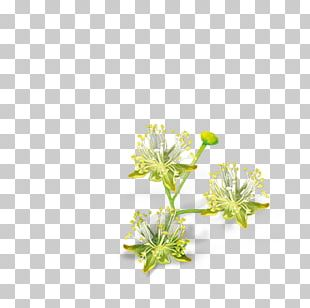 Lindens Cut Flowers Petal Ezki-ur PNG