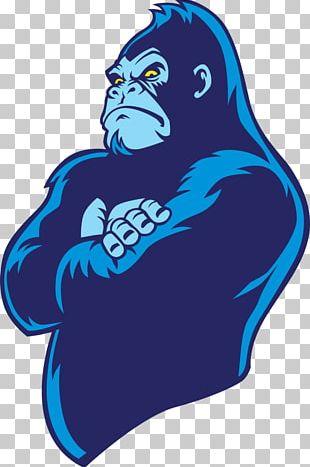 Gorilla Bwindi Impenetrable National Park Ape PNG
